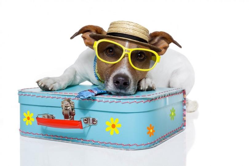 Med hundebur til Monaco